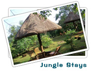 Jungle Stays : Eco Tourism Deals in India