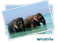 Wildlife Stays : Eco Tourism Deals in India